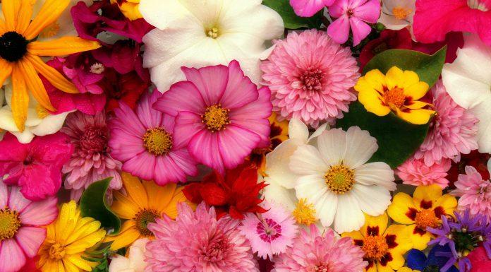 פרחים לכולם – איך לקנות פרחים בצורה חכמה