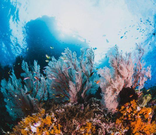 איזה פעילויות באילת יש במצפה התת ימי